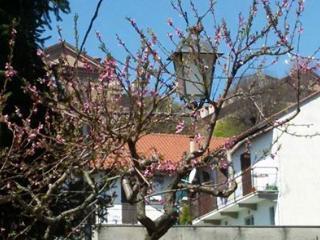 L'Albero, Montaldo Torinese