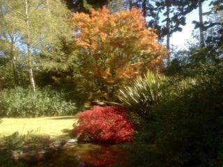 Autumn colors in garden