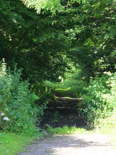 Lovely Forrest walks