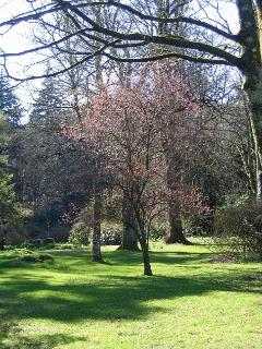 The landscaped gardens in April