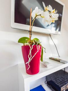 TV-watching orchid