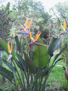 fiori nel giardino privato...