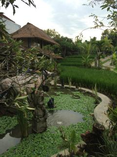 KTS Villa rice field view with cow statue & frog water fountain