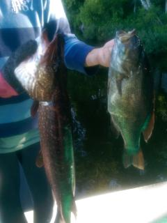 caught fish right off the dock