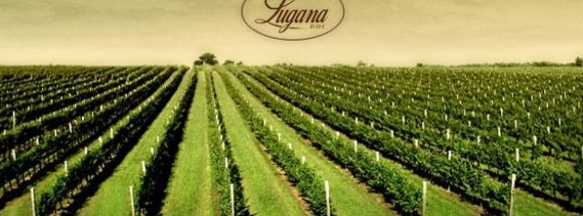 Lugana Wineyards