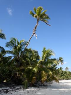 Another beach in a tropical setting