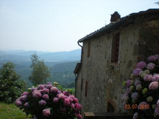 Country house on the hills of Lucca.Pool.Sleep 8.