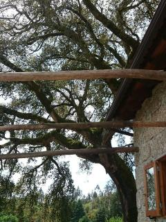 The beautiful old Sobreiro (Cork Oak) tree that provides wonderful dappled shade.