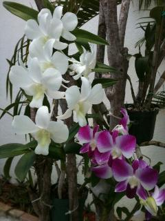 Orchids to give you beauty