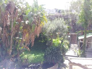 Pithecusa Lemon House