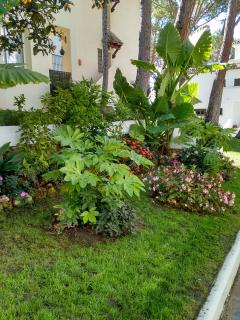 Side of Apartment Garden