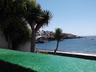 Drago, árbol  autóctono de Canarias