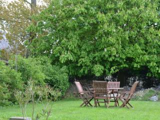The marronier, the horse chestnut tree
