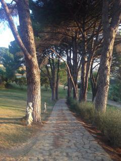 Viale dei pini marittimi visto dalla casa padronale
