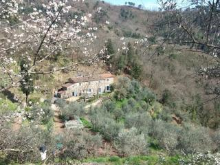 View of the Tananei farmhouse from the olive trees hill in front