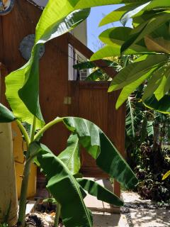 Shower among the banana trees.