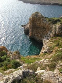 Costra adriatica