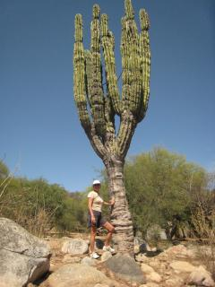 Cardon cactus for which our town was named.