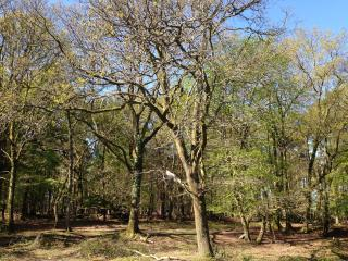 The New Forest, right on your doorstep!