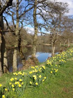 Spring in Wark