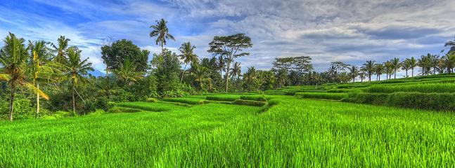 Rice paddy view-near villas