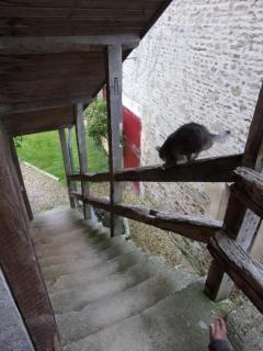 l'escalier des chambres et le chat
