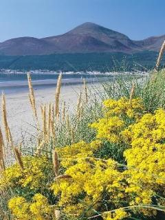 Murlough Beach…a short walk away. Big kids and little kids will enjoy running down the dunes!