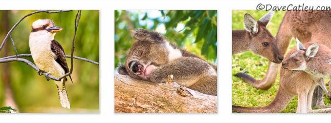 yanchep national park, kangeroos, koalas, kookaburras and caves