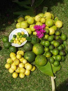 Loads of fruit