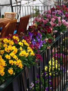 spring on terrace