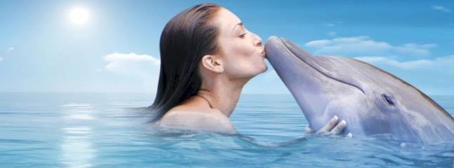 Kiss A Dolphin - Dolphin Cove, Ocho Rios Jamaica