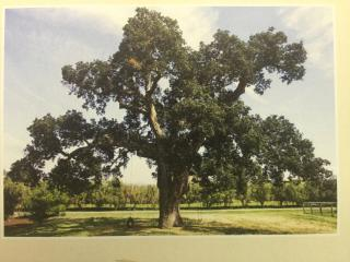 View of majestic oak tree from front door.  Perfect location for a wedding or other event