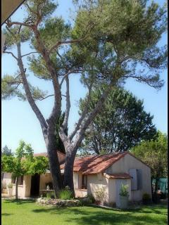 Notre gigantesque pin