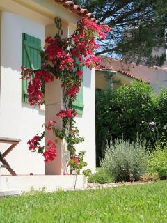 Bougainvillea and kitchen window