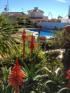 Our our beautiful garden and 12m x 5m private pool exclusive for guests staying at casa nueve