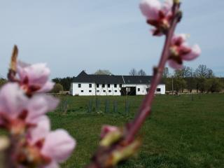 Peškův mlýn, Borovany