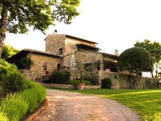 Edera, Castellina In Chianti