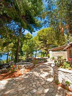 Villa and the pine trees