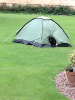 Camping also available for extra guests in grounds by prior arrangement indoor shower for use