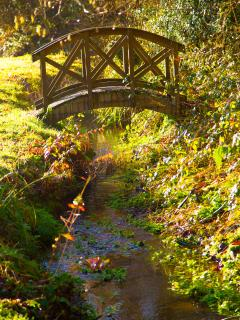 Bridge from orchard into woodland