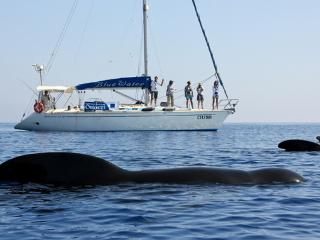 Marine Life Conservation
