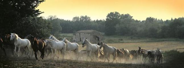 Troupeau de juments de l'élevage Delgado/ Delgado Stud's herd of mares and foals