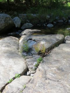 A great spot to sunbathe on our rocks at Trout Brook.