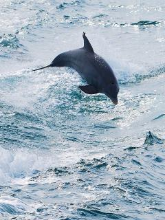 Take a cruise with the wild dolphins.