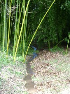 Autour du moulin: La bambouseraie