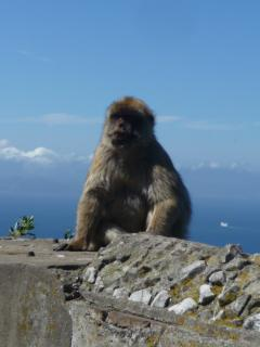 Visit Gibraltar to see its historic defences - and the Apes!