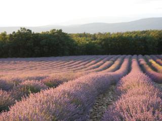 La Petite Maison - Serene house at lavender & pool