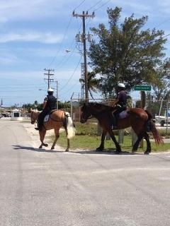 local police patrol on horseback during special events