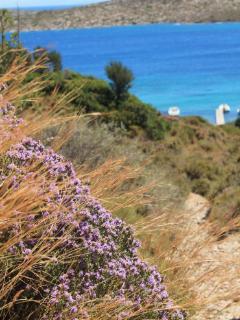profumi e colori delle spiagge di Leros