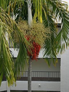 Palm in center atrium